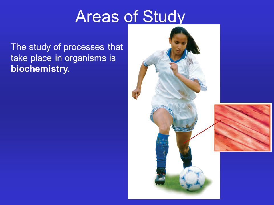 The study of processes that take place in organisms is biochemistry. Areas of Study