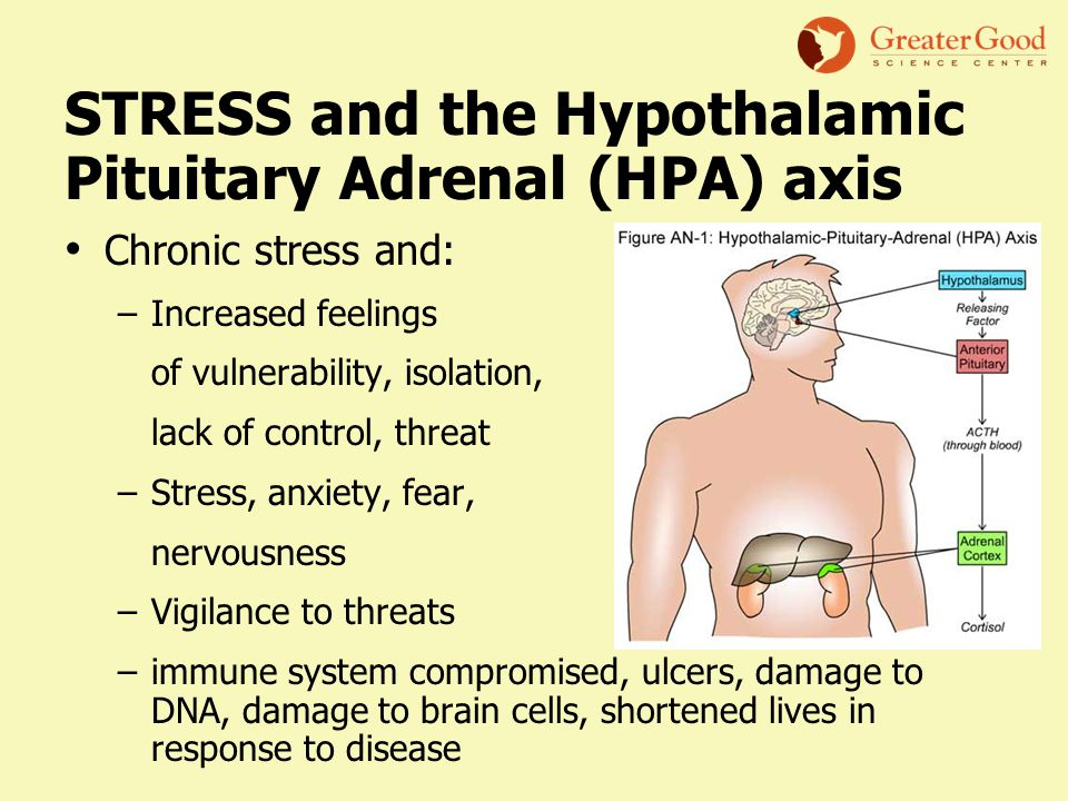 STRESS and the Hypothalamic Pituitary Adrenal (HPA) axis Chronic stress and: –Increased feelings of vulnerability, isolation, lack of control, threat –Stress, anxiety, fear, nervousness –Vigilance to threats –immune system compromised, ulcers, damage to DNA, damage to brain cells, shortened lives in response to disease