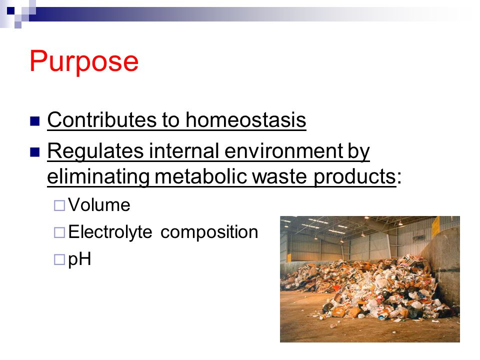 Purpose Contributes to homeostasis Regulates internal environment by eliminating metabolic waste products:  Volume  Electrolyte composition  pH