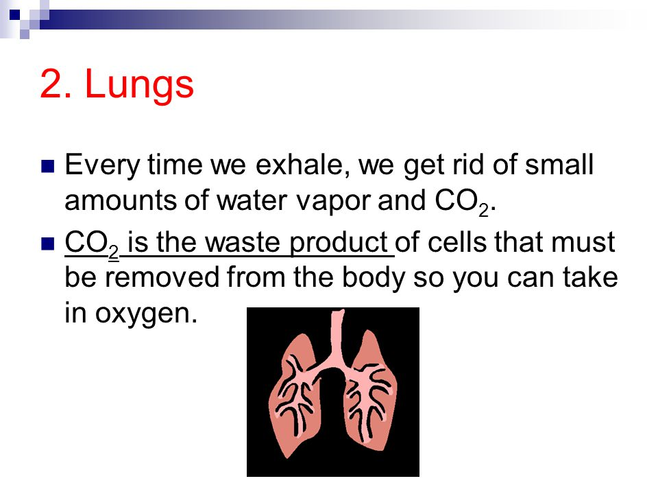 2. Lungs Every time we exhale, we get rid of small amounts of water vapor and CO 2. CO 2 is the waste product of cells that must be removed from the b