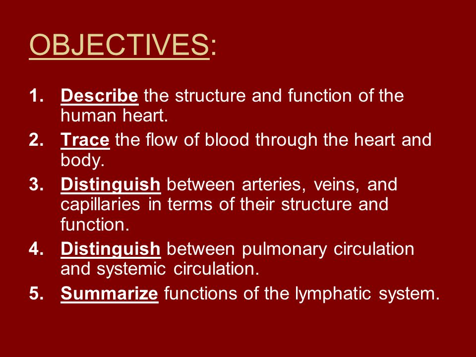 OBJECTIVES: 1.Describe the structure and function of the human heart. 2.Trace the flow of blood through the heart and body. 3.Distinguish between arte