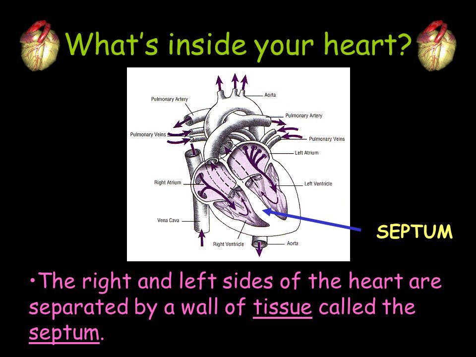 How does it move stuff.Your heart is the pump that sends the blood through the system.