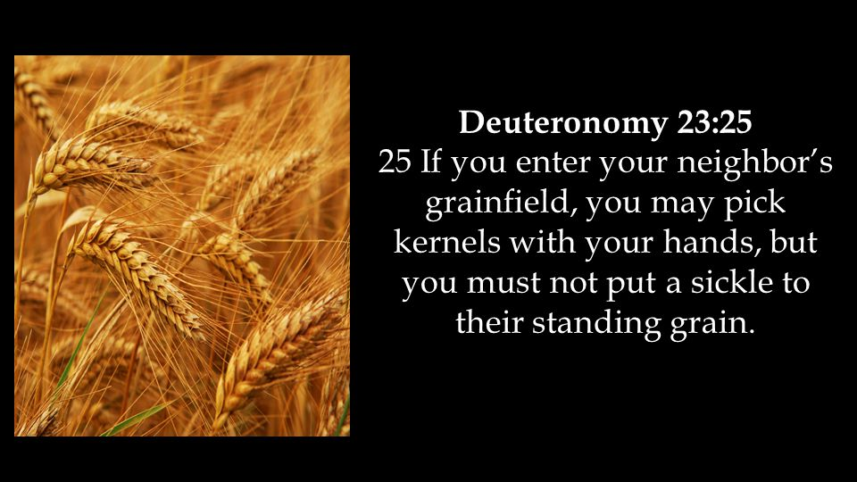 Deuteronomy 23:25 25 If you enter your neighbor's grainfield, you may pick kernels with your hands, but you must not put a sickle to their standing grain.