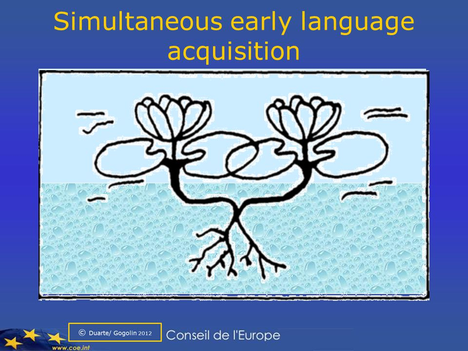 Simultaneous early language acquisition