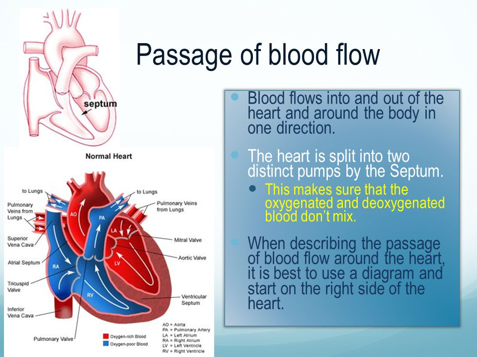 Passage of blood flow Blood flows into and out of the heart and around the body in one direction. The heart is split into two distinct pumps by the Se