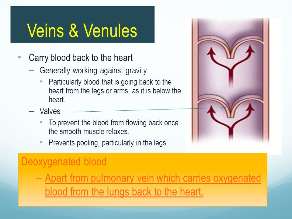 Carry blood back to the heart – Generally working against gravity Particularly blood that is going back to the heart from the legs or arms, as it is b