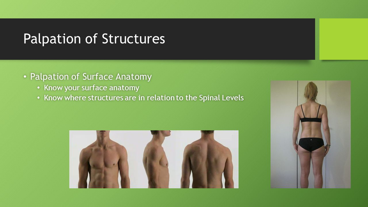 Palpation of Structures Palpation of Surface Anatomy Palpation of Surface Anatomy Know your surface anatomy Know your surface anatomy Know where struc