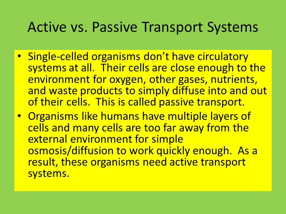 Active vs. Passive Transport Systems Single-celled organisms don't have circulatory systems at all.
