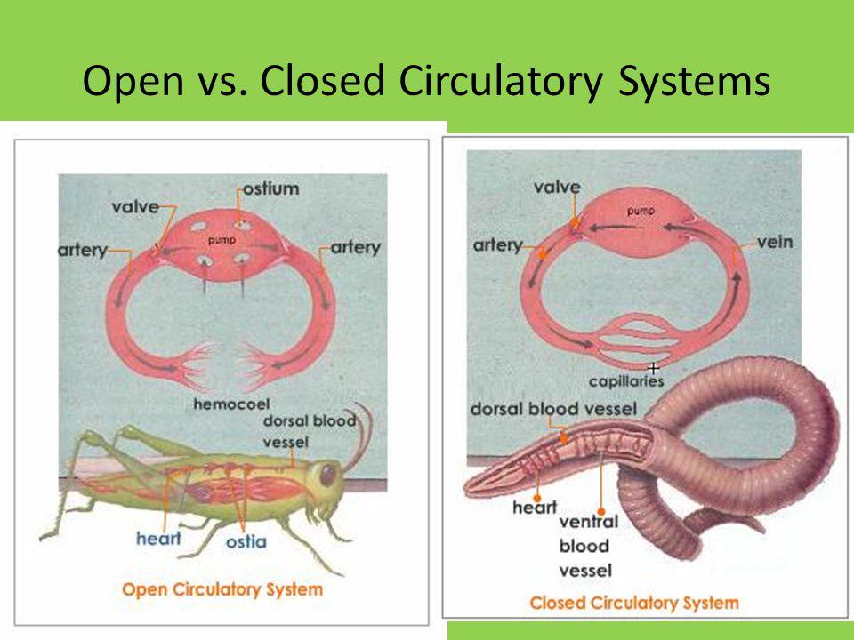 Open vs. Closed Circulatory Systems