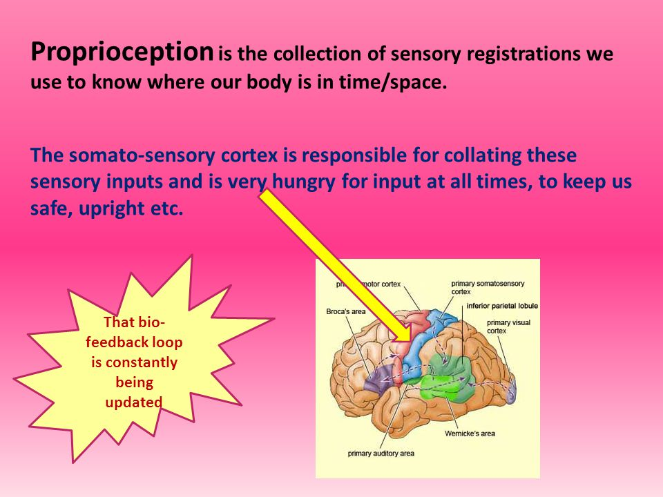 Proprioception is the collection of sensory registrations we use to know where our body is in time/space.