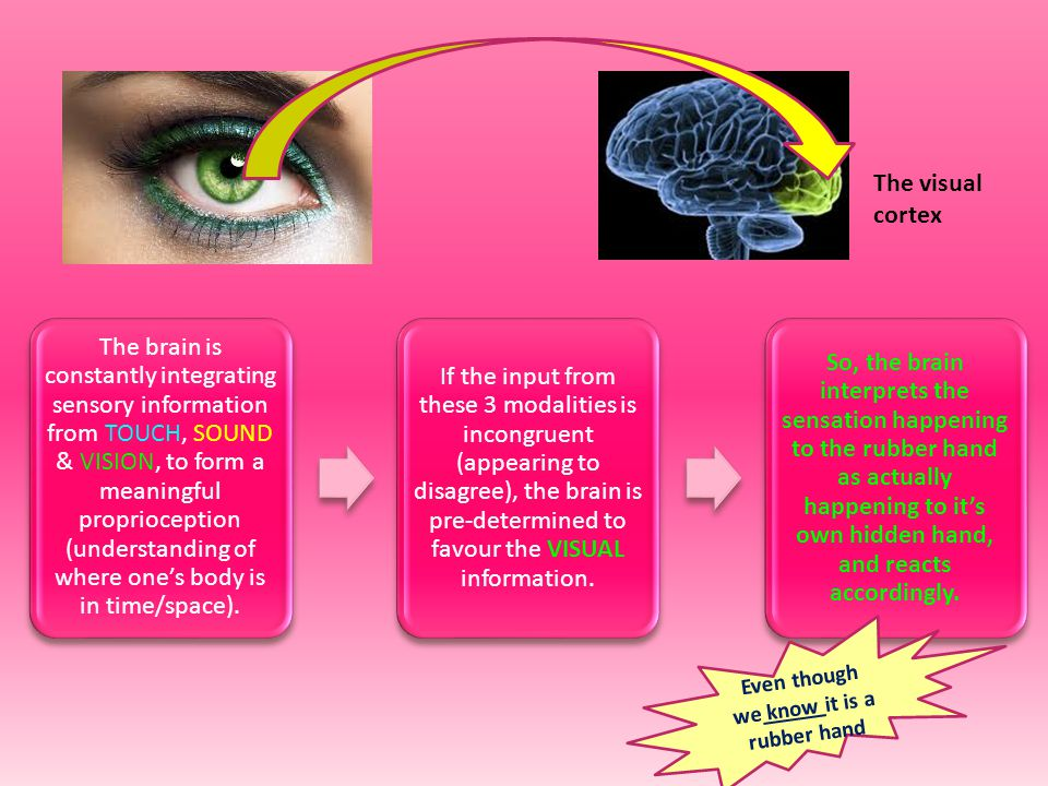 Ramachandran is a very clever Psychologist, who suggested that if the brain can re-wire itself to receive feedback from the absent limb on the FACE.................it should therefore, be possible to use this neural plasticity in therapy, to treat the pain felt from a phantom limb.
