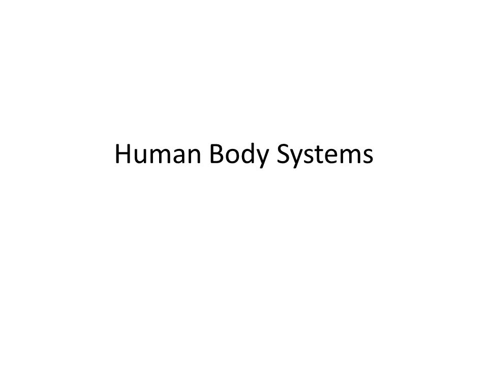 Can you…. name all of the body systems? tell what each system does?
