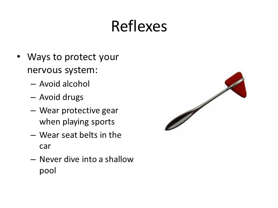 Reflexes Ways to protect your nervous system: – Avoid alcohol – Avoid drugs – Wear protective gear when playing sports – Wear seat belts in the car –