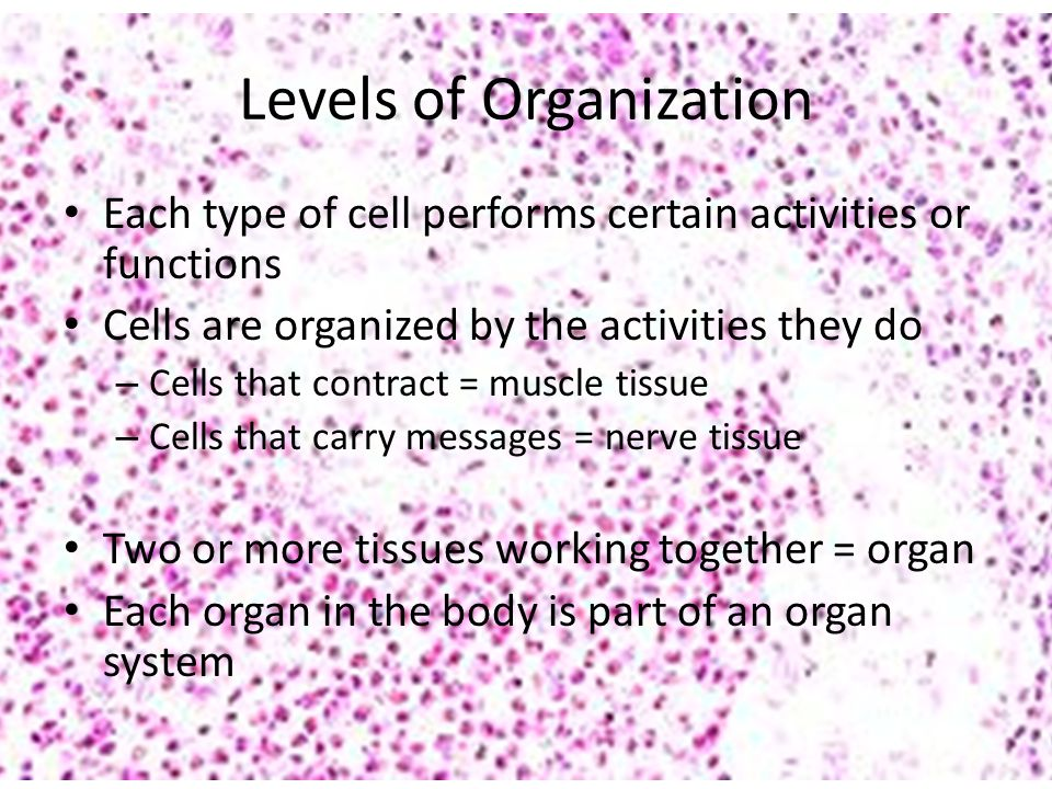 Levels of Organization Each type of cell performs certain activities or functions Cells are organized by the activities they do – Cells that contract