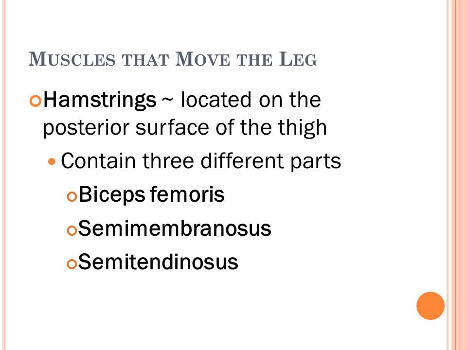 M USCLES THAT M OVE THE L EG Hamstrings ~ located on the posterior surface of the thigh Contain three different parts Biceps femoris Semimembranosus S