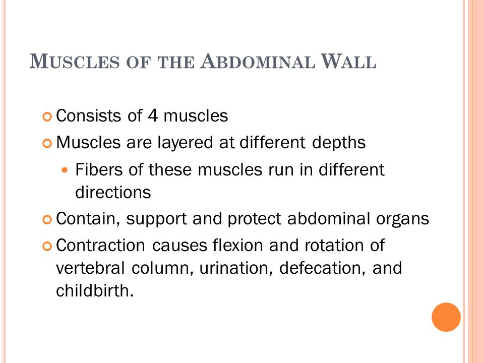 M USCLES OF THE A BDOMINAL W ALL Consists of 4 muscles Muscles are layered at different depths Fibers of these muscles run in different directions Con