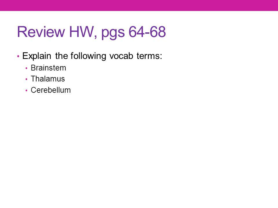 Review HW, pgs 64-68 Explain the following vocab terms: Brainstem Thalamus Cerebellum