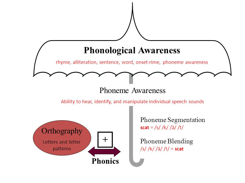 Phonological Awareness rhyme, alliteration, sentence, word, onset-rime, phoneme awareness Phoneme Awareness Ability to hear, identify, and manipulate