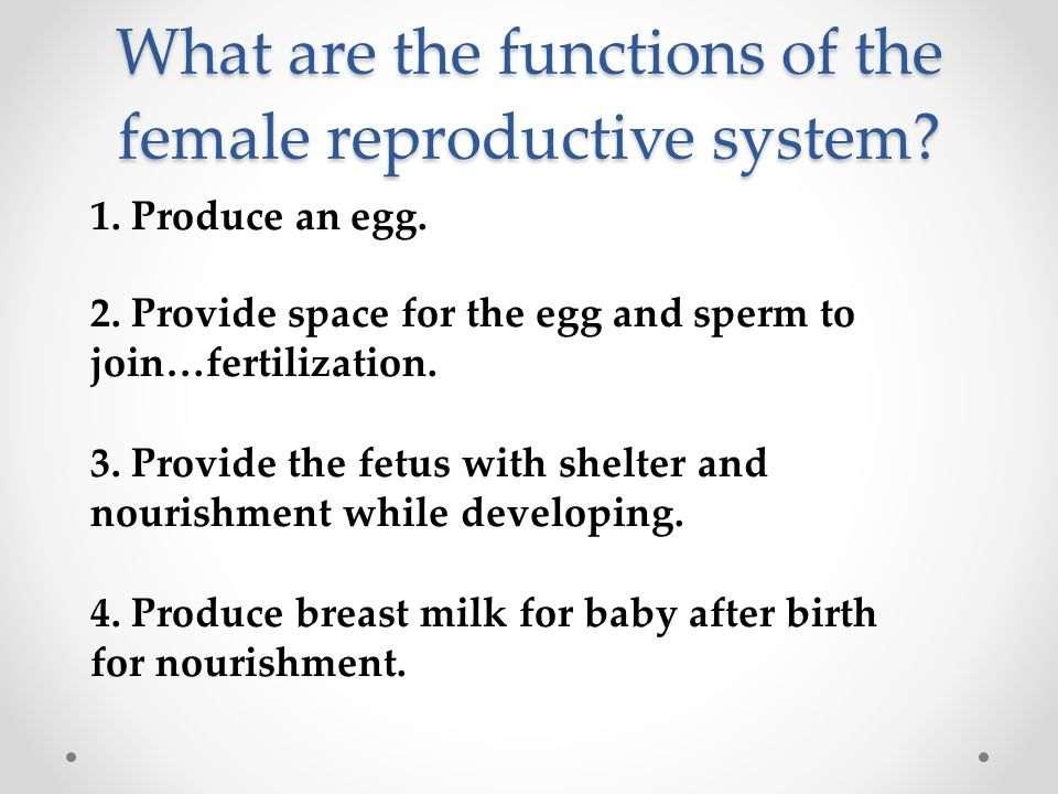 What are the functions of the female reproductive system? 1. Produce an egg. 2. Provide space for the egg and sperm to join…fertilization. 3. Provide