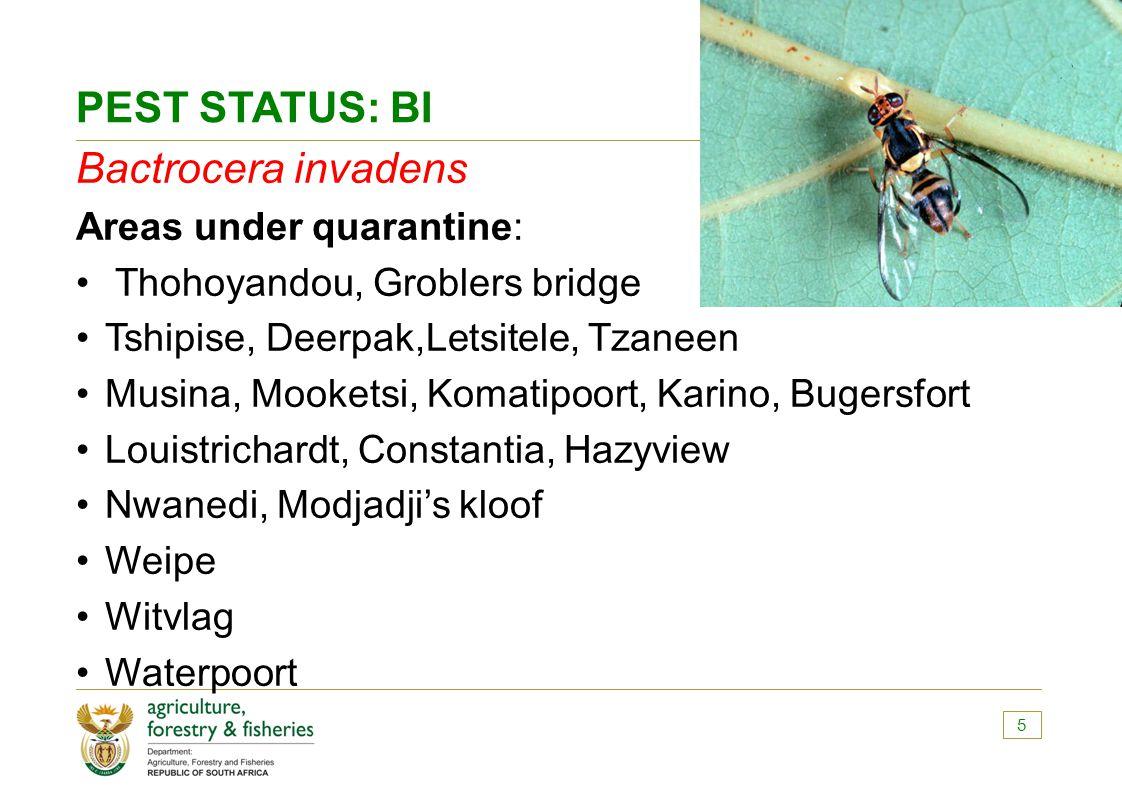 PEST STATUS: BI Bactrocera invadens Areas under quarantine: Thohoyandou, Groblers bridge Tshipise, Deerpak,Letsitele, Tzaneen Musina, Mooketsi, Komati