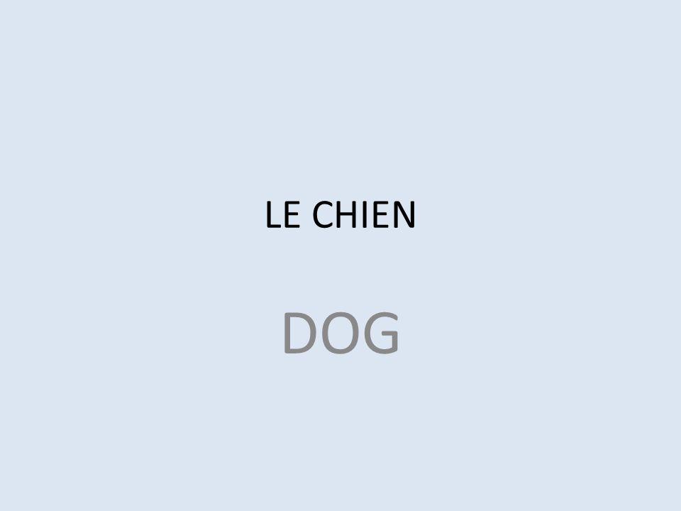LE CHIEN DOG