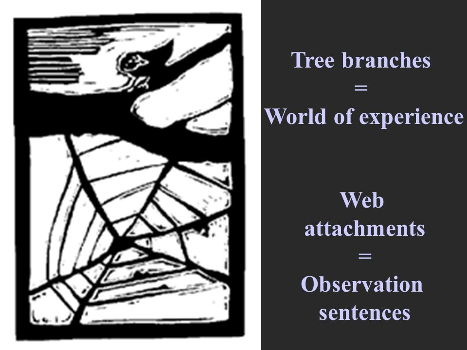 Tree branches = World of experience Web attachments = Observation sentences