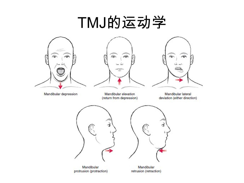 TMJ 的运动学