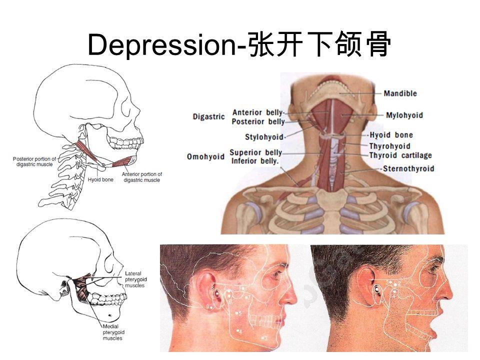 Depression- 张开下颌骨