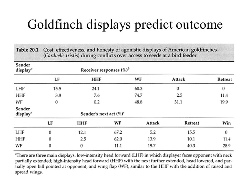 Goldfinch displays predict outcome