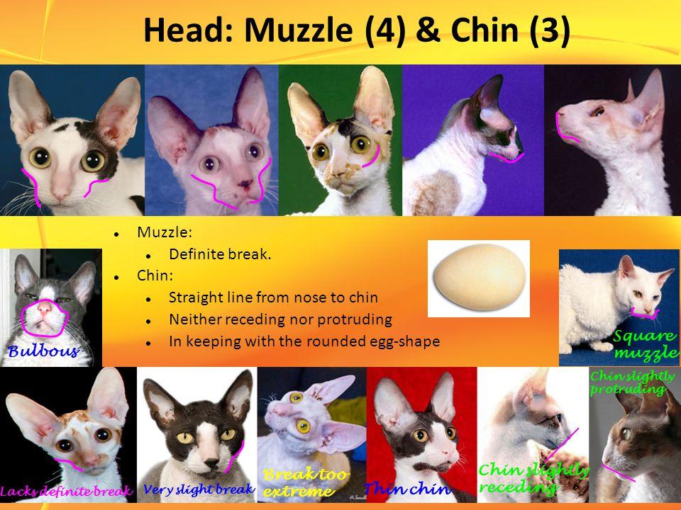 Head: Muzzle (4) & Chin (3) Muzzle: Definite break.
