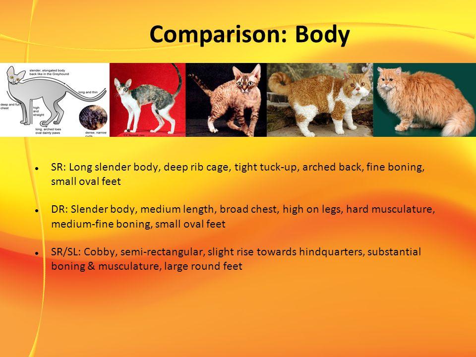 Comparison: Body SR: Long slender body, deep rib cage, tight tuck-up, arched back, fine boning, small oval feet DR: Slender body, medium length, broad