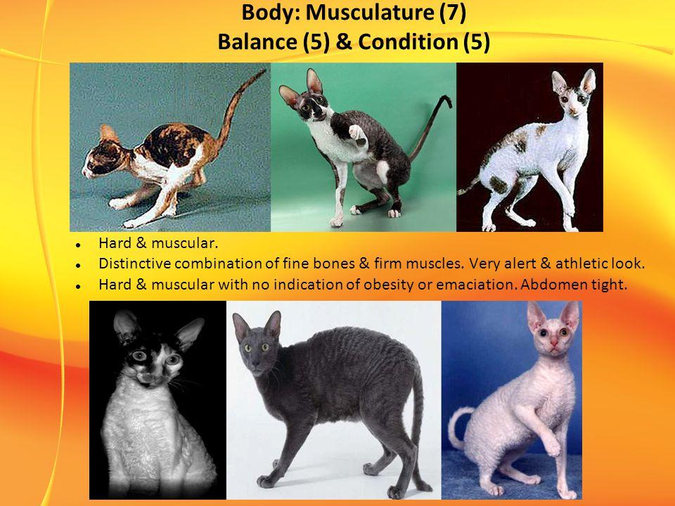 Body: Musculature (7) Balance (5) & Condition (5) Hard & muscular.
