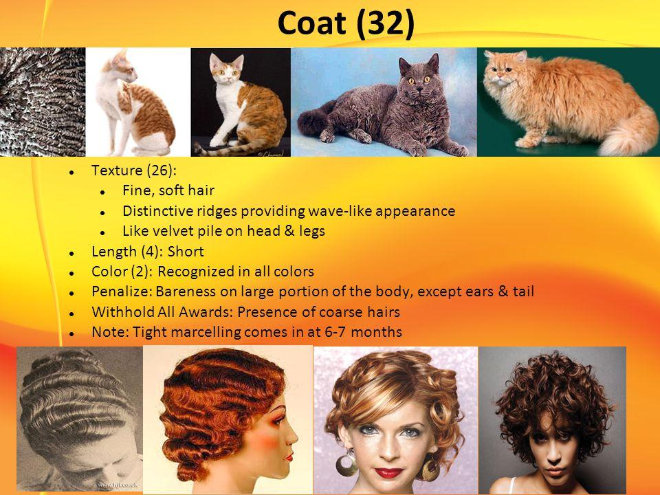 Coat (32) Texture (26): Fine, soft hair Distinctive ridges providing wave-like appearance Like velvet pile on head & legs Length (4): Short Color (2):