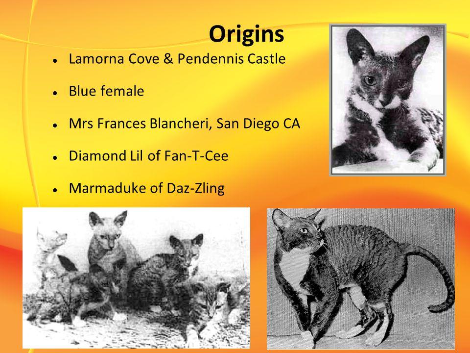 Origins Lamorna Cove & Pendennis Castle Blue female Mrs Frances Blancheri, San Diego CA Diamond Lil of Fan-T-Cee Marmaduke of Daz-Zling