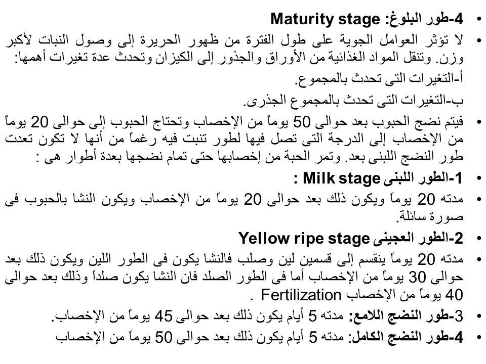 4-طور البلوغ: Maturity stage لا تؤثر العوامل الجوية على طول الفترة من ظهور الحريرة إلى وصول النبات لأكبر وزن. وتنقل المواد الغذائية من الأوراق والجذور