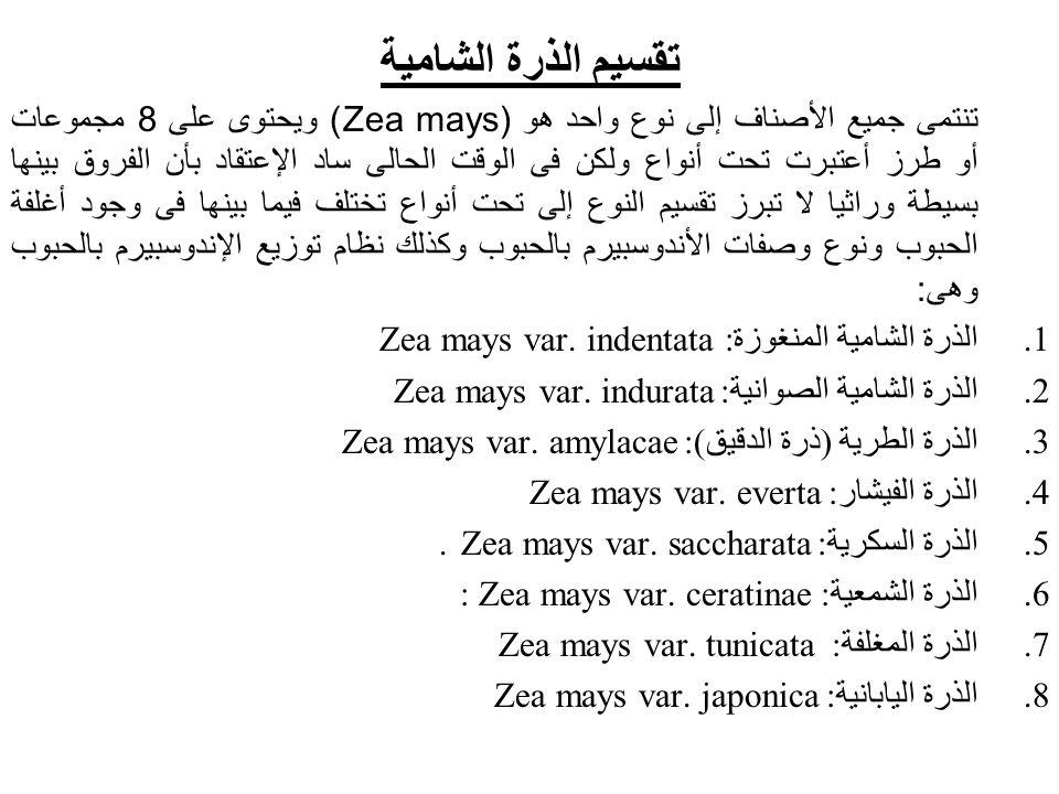 تقسيم الذرة الشامية تنتمى جميع الأصناف إلى نوع واحد هو (Zea mays) ويحتوى على 8 مجموعات أو طرز أعتبرت تحت أنواع ولكن فى الوقت الحالى ساد الإعتقاد بأن ا