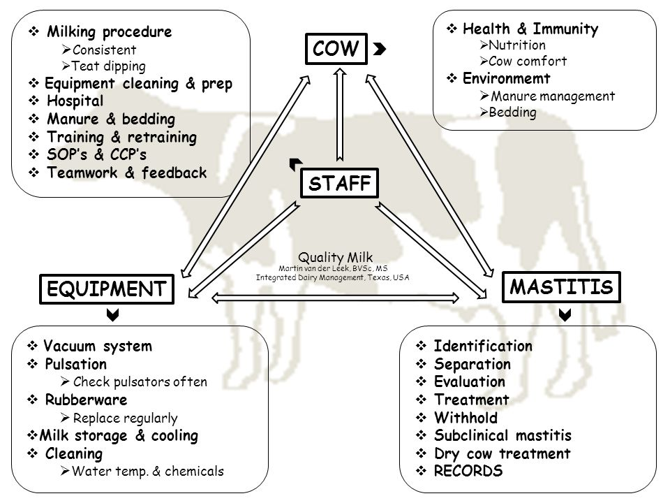 COW EQUIPMENT MASTITIS STAFF  Health & Immunity  Nutrition  Cow comfort  Environmemt  Manure management  Bedding  Milking procedure  Consisten