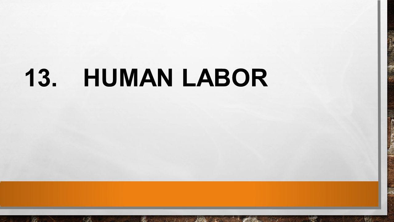 13.HUMAN LABOR