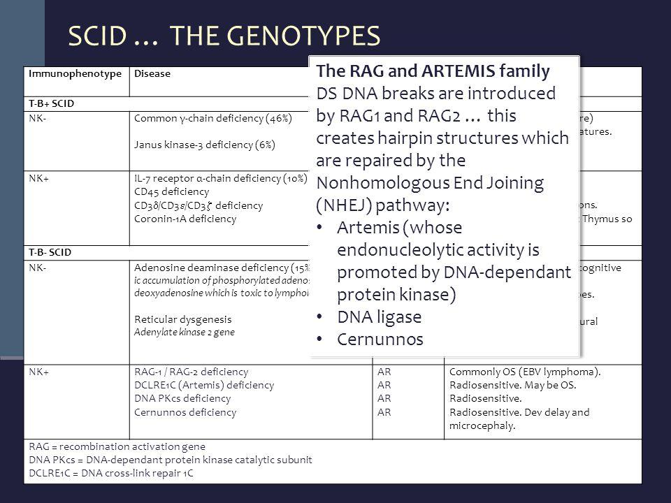 SCID … THE GENOTYPES ImmunophenotypeDiseaseInheritanceClinical Features T-B+ SCID NK-Common γ-chain deficiency (46%) Janus kinase-3 deficiency (6%) XL AR Growth failure.