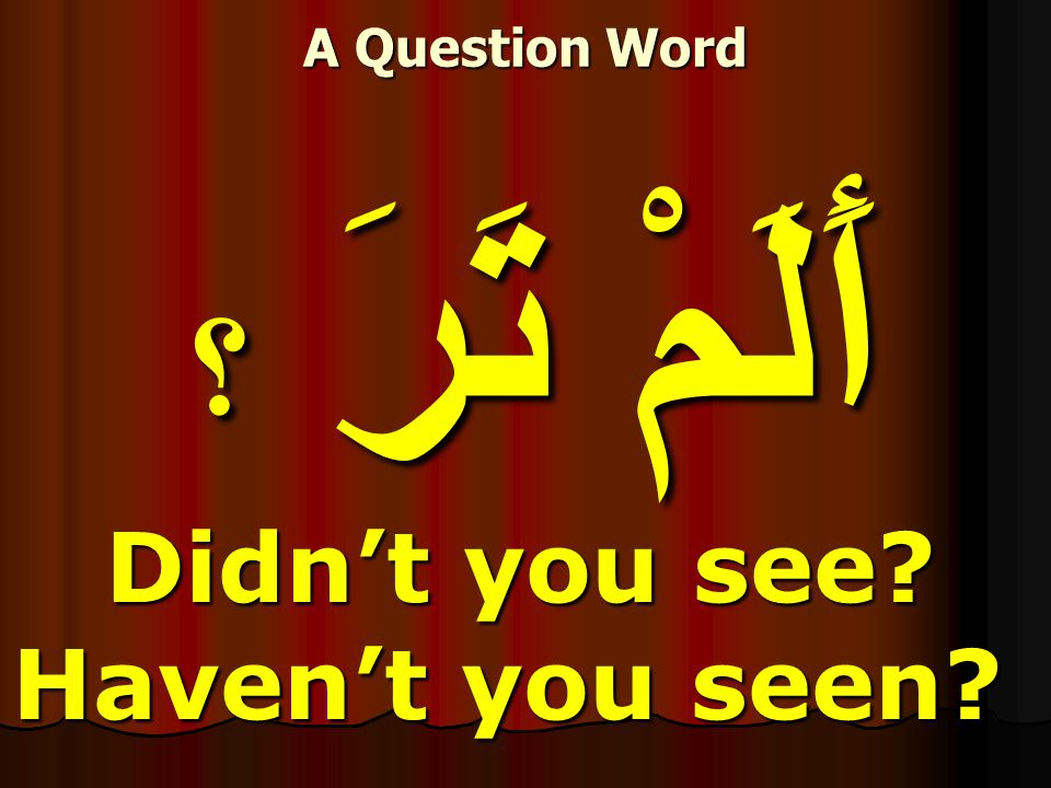 أَلَمْ تَرَ ؟ Didn't you see Didn't you see Haven't you seen A Question Word