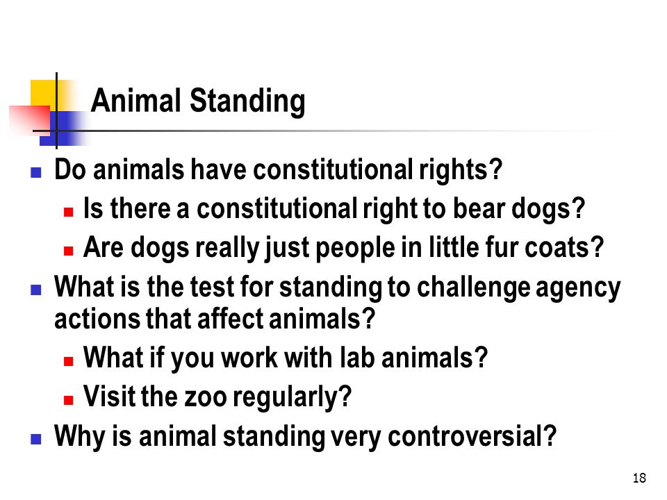 18 Animal Standing Do animals have constitutional rights.