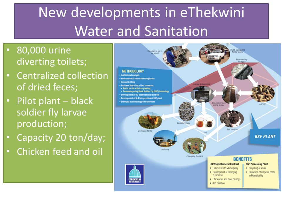 New developments in eThekwini Water and Sanitation 80,000 urine diverting toilets; Centralized collection of dried feces; Pilot plant – black soldier