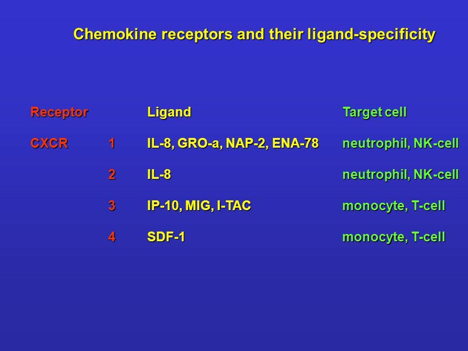 ReceptorLigandTarget cell CXCR1IL-8, GRO-a, NAP-2, ENA-78neutrophil, NK-cell 2IL-8neutrophil, NK-cell 3IP-10, MIG, I-TACmonocyte, T-cell 4SDF-1monocyt