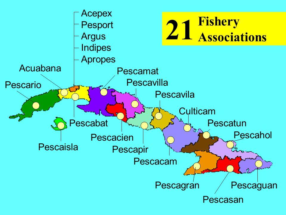 Pescario Acuabana Pescaisla Pescabat Pescamat Pescavilla Pescacien Pescavila Culticam Pescapir Pescacam Pescatun Pescahol Pescagran Pescasan Pescaguan Acepex Pesport Argus Indipes Apropes Fishery Associations 21