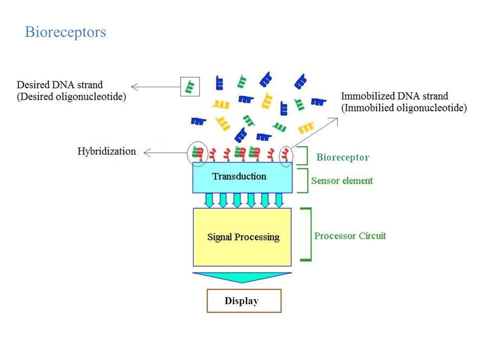 Bioreceptor Display
