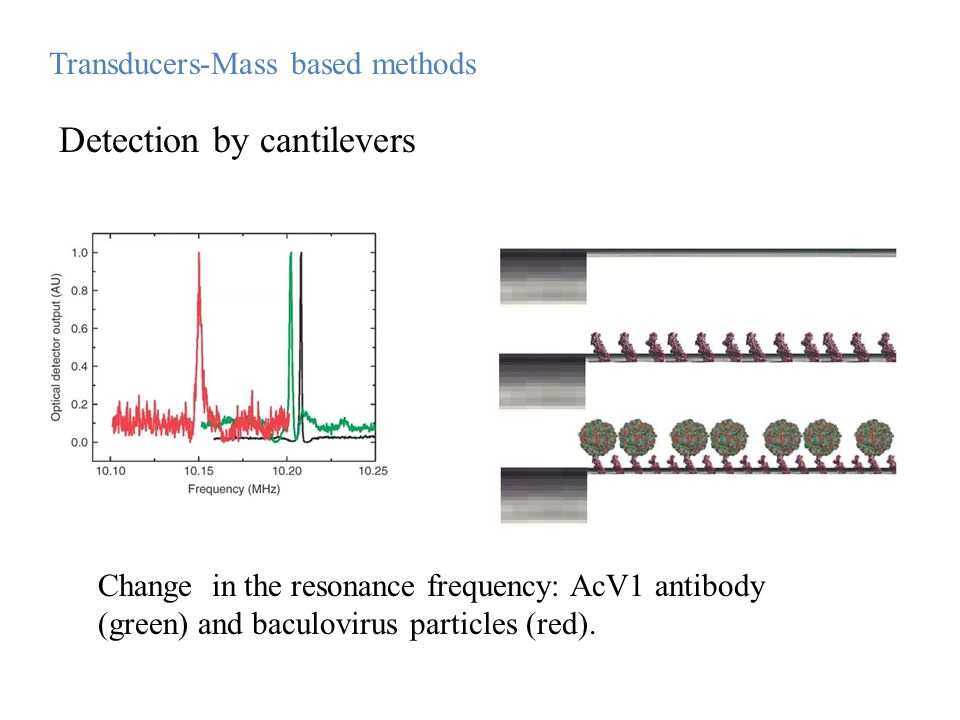 Change in the resonance frequency: AcV1 antibody (green) and baculovirus particles (red). Transducers-Mass based methods Detection by cantilevers