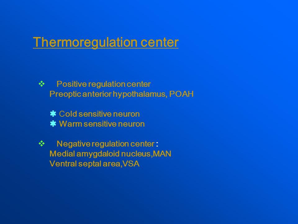 Thermoregulation center  Positive regulation center Preoptic anterior hypothalamus, POAH  Cold sensitive neuron  Warm sensitive neuron  Negative regulation center : Medial amygdaloid nucleus,MAN Ventral septal area,VSA