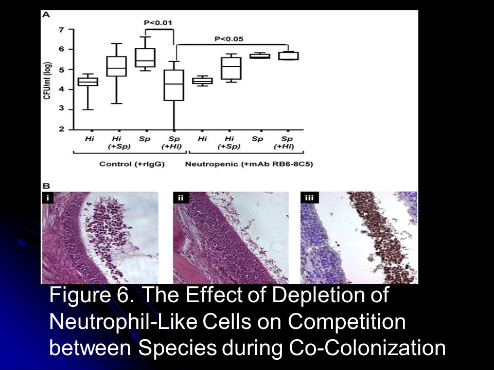 Figure 6. The Effect of Depletion of Neutrophil-Like Cells on Competition between Species during Co-Colonization