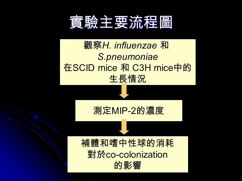 實驗主要流程圖 觀察 H. influenzae 和 S.pneumoniae 在 SCID mice 和 C3H mice 中的 生長情況 測定 MIP-2 的濃度 補體和嗜中性球的消耗 對於 co-colonization 的影響