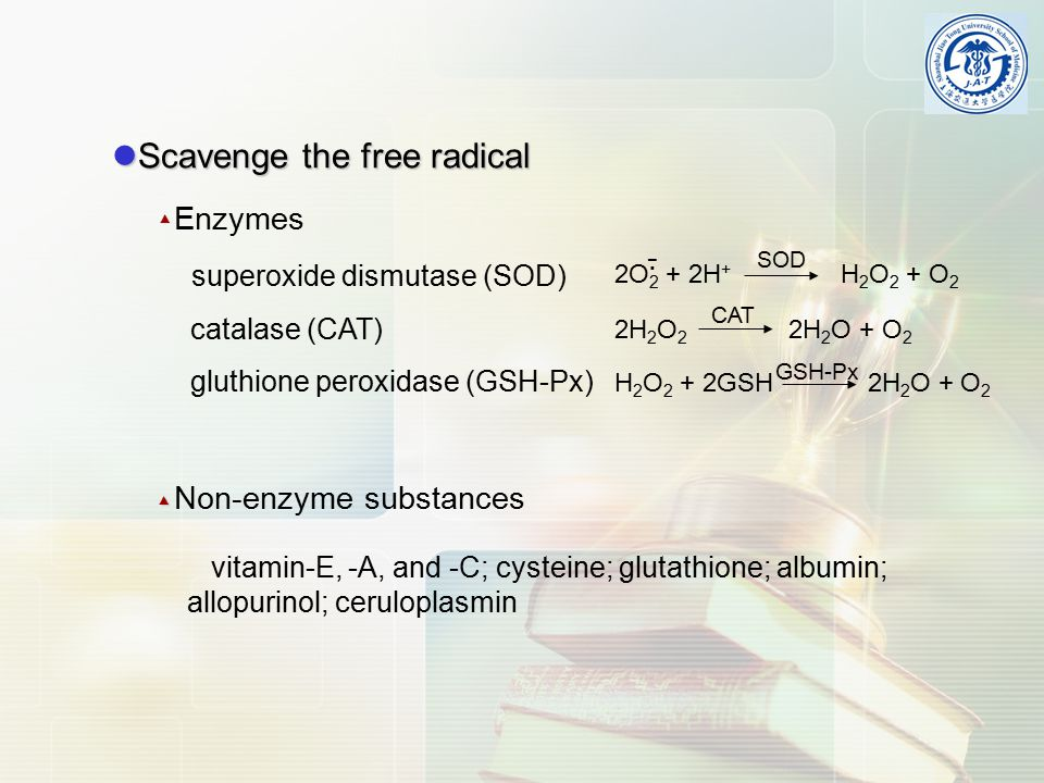 Scavenge the free radical Scavenge the free radical Enzymes superoxide dismutase (SOD) catalase (CAT) gluthione peroxidase (GSH-Px)▲ 2O 2 + 2H + H 2 O